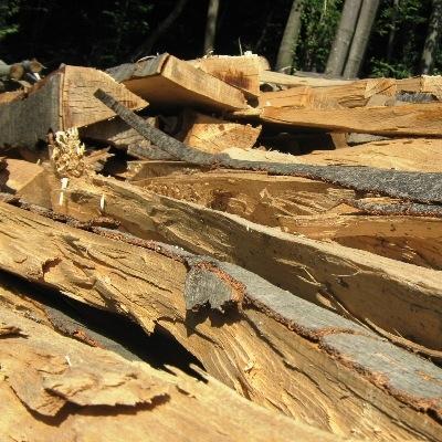 Šesterica toži EU, ker šteje med obnovljive vire tudi gozdno biomaso
