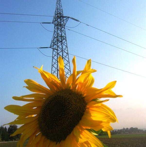 Povprečne cene odstopanj elektroenergetskega sistema so lani znatno padle