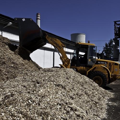 Proizvodnja elektrike iz trdne biomase v EU bi lahko v letu 2020 presegla 130 TWh
